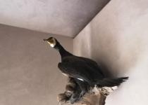 «Таежный охотник» Зал 1 фото
